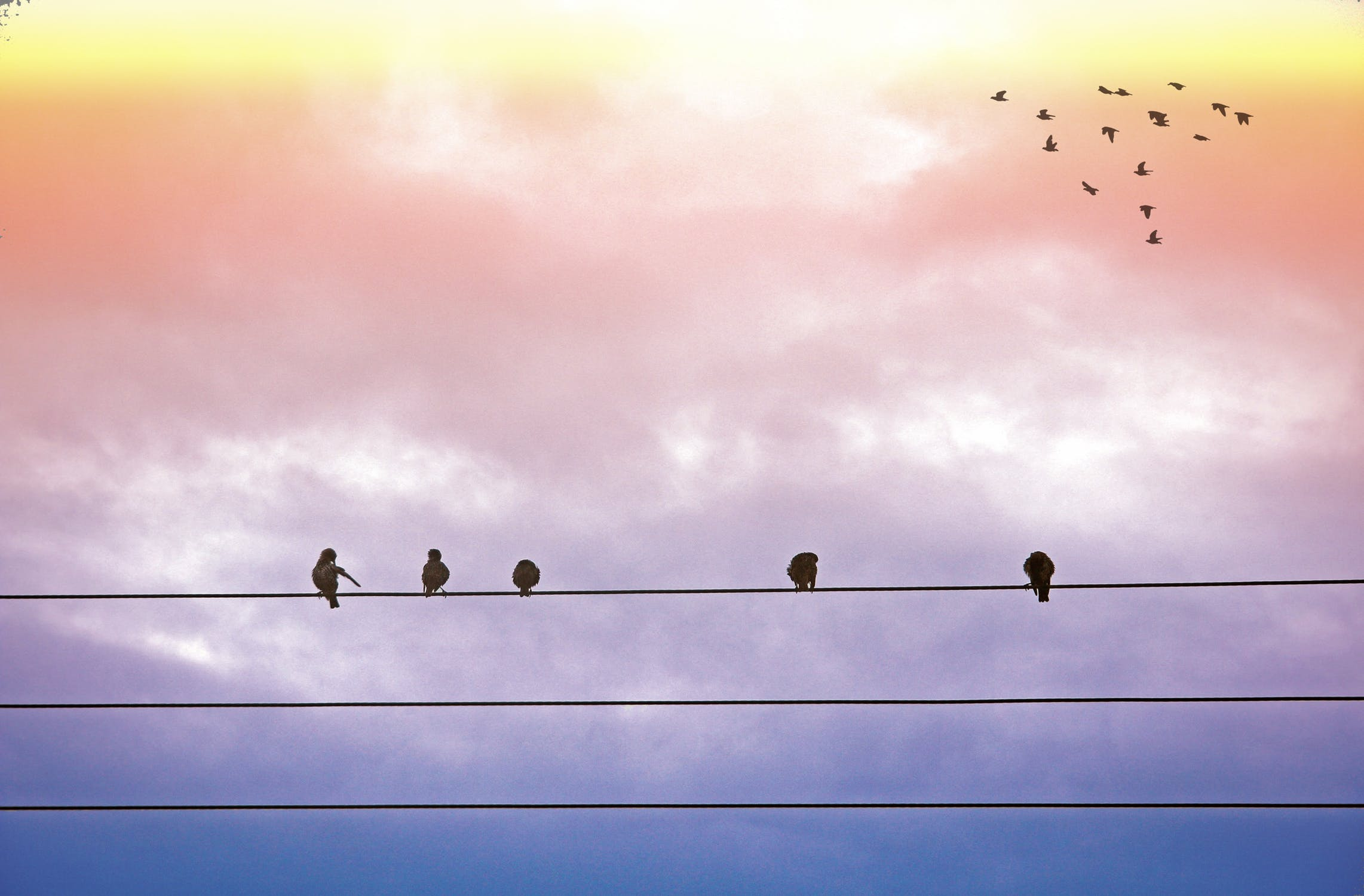 message from the birds